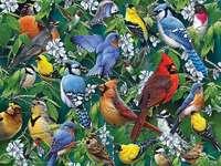 Πολύχρωμα πουλιά.