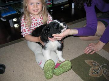 Dog and Zosia - Little Alex with Zosia on the carpet in the room