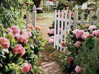 Un sentier de fleurs dans la cour