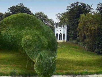 Zielony kotek - Kotek z roślinek zrobiony