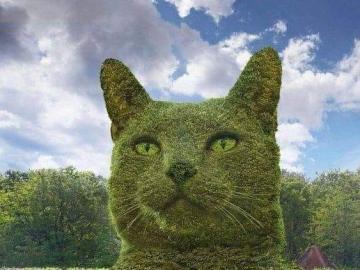 Zielony kotek - Zielony kotek wiosenny