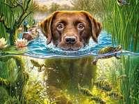Dog in a bath.