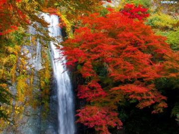 Cudna jesień - Najbardziej kolorową mamy jesień Najbardziej kolorystyczna pora roku Przepiękna jesień