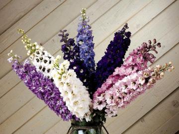 beauty in flowers - flowers in a vase beauty art