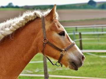 blond horse - horse head with braid