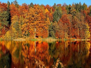 Árboles de colores otoñales - Naturaleza, árboles coloridos, otoño