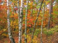 A wonderful autumn - In the fall and autumn the colors are shimmering