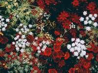Weiße und rote Blumen - Schöne Blumen in Weiß und Rot