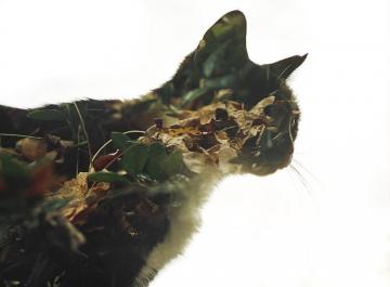 Mystery Cat - double exposure mystery cat
