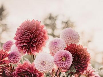 Asteraceous Blumen