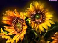 Sunflowers - sunflowers sunflowers sunflowers sunflowers