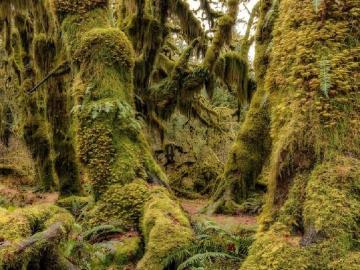 Bosque cubierto de musgo - Bosque cubierto de musgo cubierto de musgo