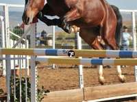 my horse is jumping again! - horse jumping over the jump that i made for her!