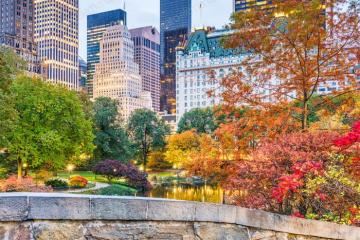 Central Park in New York - Central Park is an oasis of greenery in New York. Located in downtown Manhattan, between Central Par