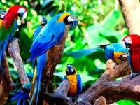 Blaue und rote Vögel