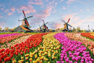 Where are the tulips and windmills? - Of course, this is the landscape of the Netherlands. Tulips and windmills are characteristic element