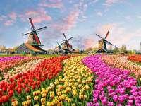 ¿Dónde están los tulipanes y molinos de viento? - Por supuesto, este es el paisaje de los Países Bajos. Los tulipanes y los molinos de viento son ele
