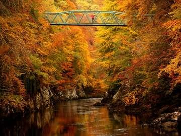 vista de otoño - hermosas hojas y arroyo