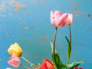 Bunte Tulpen auf dem Tisch - Kühles Bild eines Blumenstraußes der Tulpen. Puzzle Blumen.