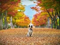 Kleiner Hund im Herbst im Park