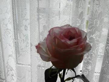 rose in a crystal vase - a beautiful, lonely rose in a crystal vase