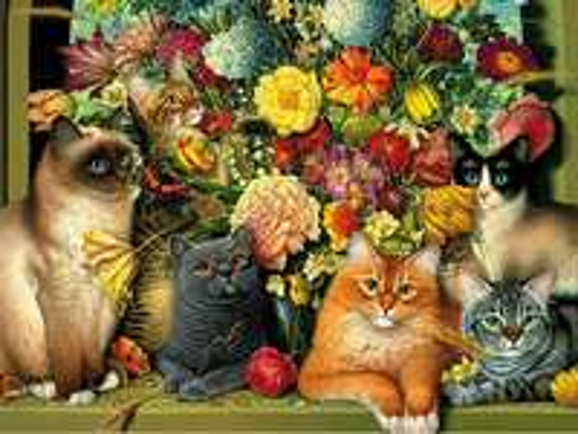 Rasowe koty.