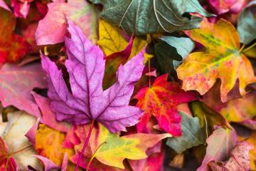 Wonders of autumn - Colorful autumn leaves