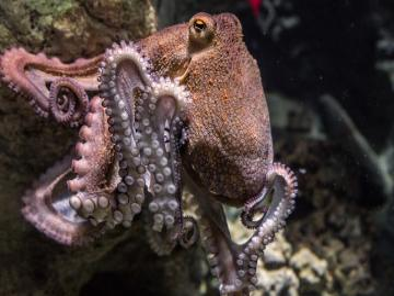 Octopus - The octopus is in full swing