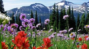 Flowers in a mountain glade. - Flowers in a mountain glade.