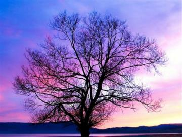 A tree in a beautiful sunset. - A beautiful landscape in the sunset.