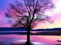 Ένα δέντρο σε ένα όμορφο ηλιοβασίλεμα. - Ένα όμορφο τοπίο στο ηλιοβασίλεμα.