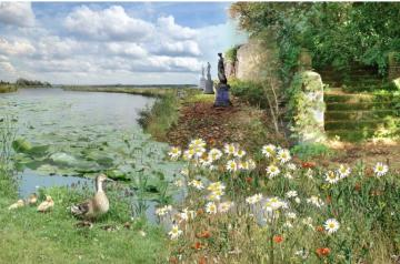Chamomile by the water. - Puzzle: chamomile over the water.
