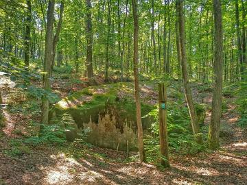 Forest floor - The photo shows the forest floors: treetops, undergrowth, forest undergrowth and felling