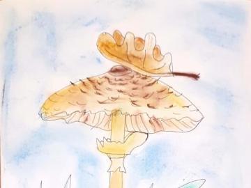 Edible mushrooms - Edible mushrooms color version: owl, boletus, mushroom, morel, goose.