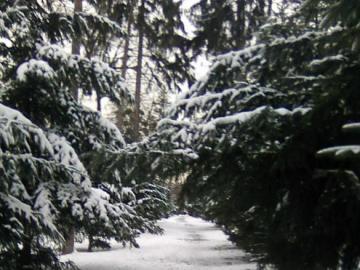 Ein Wintertag im Park - Bardzo brakuje mi śnieżnych zim