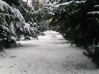 Um dia de inverno no parque