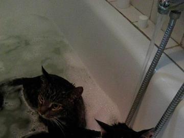 Ungewöhnliches Bad - Mówi się,  że koty nie lubią wody