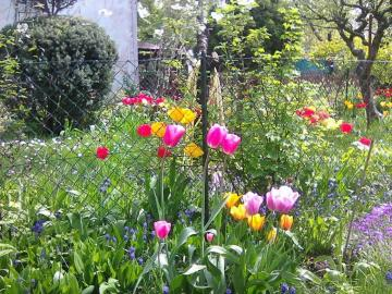 Spring in the garden - When everything blooms around, hope enters the heart