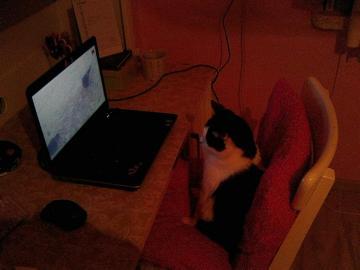 Technologie ist für alle da - Wie Sie sehen, sehen nicht nur Menschen gerne lustige Katzen im Internet.