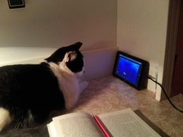 Technologie für alle - Computer, Tablet, Handy, Fernsehen - für moderne Katzen gibt es keine Einschränkungen.