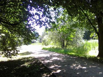 Ruhe im Schatten der Bäume - Ich mag diesen Park wirklich