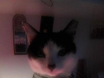 Erleuchtete Katze - Traditionell auf dem Schreibtisch.
