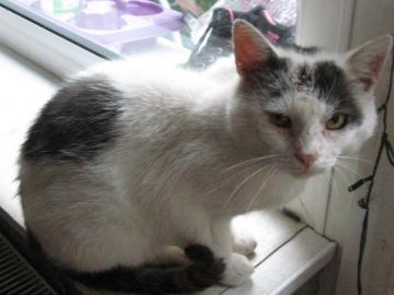Obdachlose Katze - Ich habe ihn zu mir eingeladen. Er wurde entwurmt, entstaubt, geheilt und gut gefüttert. Er will je