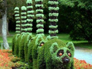 fancy hedge - fancy hedge