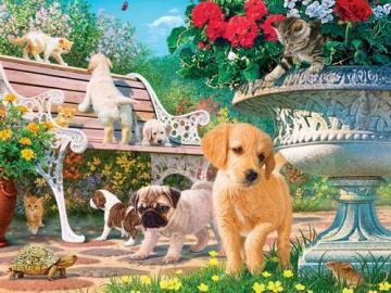 Pups in the garden. - Pets. Pups in the garden.