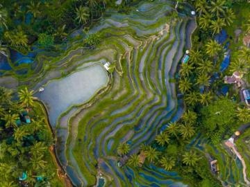 Rice terraces in Bali. - Puzzle: Rice terraces in Bali.