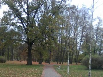 Birkengasse im Spätherbst - Birkengasse im Park (sein weiterer Abschnitt), Spätherbst.