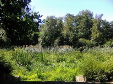 Ein sehr heißer Tag - Juli oder August im Park. Ein wunderschöner, heißer Tag.