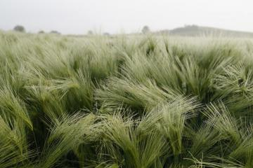 grass in the wind - grass in the wind - photo from pixabay.com (CC license)