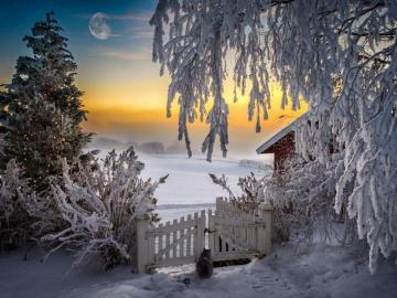Frosty night landscape - Snow-covered house in the moonlight